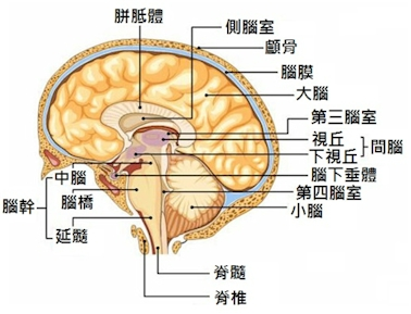 Brain Health & Puzzles