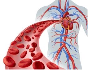 心血管的圖片搜尋結果